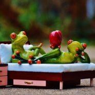 cropped-frog-1073356.jpg